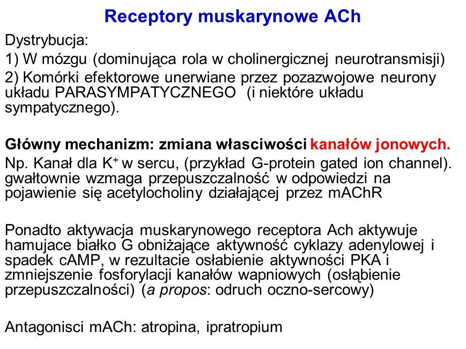 Receptory muskarynowe ACh Dystrybucja: 1) W mózgu (dominująca rola w cholinergicznej neurotransmisji) 2) Komórki efektorowe unerwiane przez pozazwojow