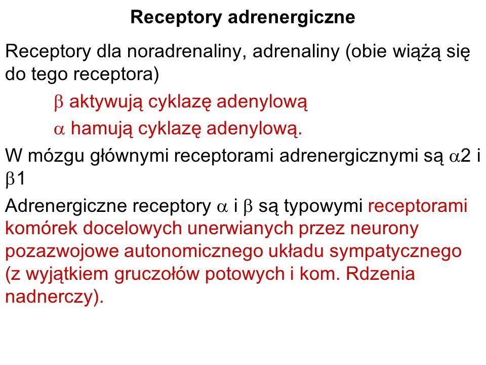 Receptory adrenergiczne Receptory dla noradrenaliny, adrenaliny (obie wiążą się do tego receptora) aktywują cyklazę adenylową hamują cyklazę adenylową