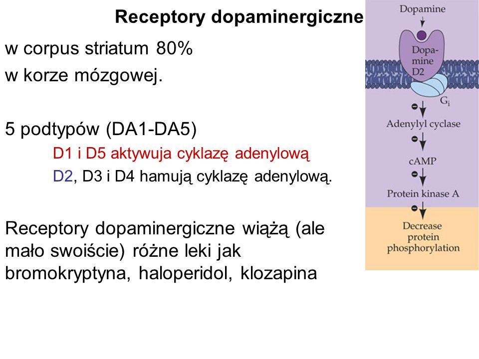 Receptory dopaminergiczne w corpus striatum 80% w korze mózgowej. 5 podtypów (DA1-DA5) D1 i D5 aktywuja cyklazę adenylową D2, D3 i D4 hamują cyklazę a