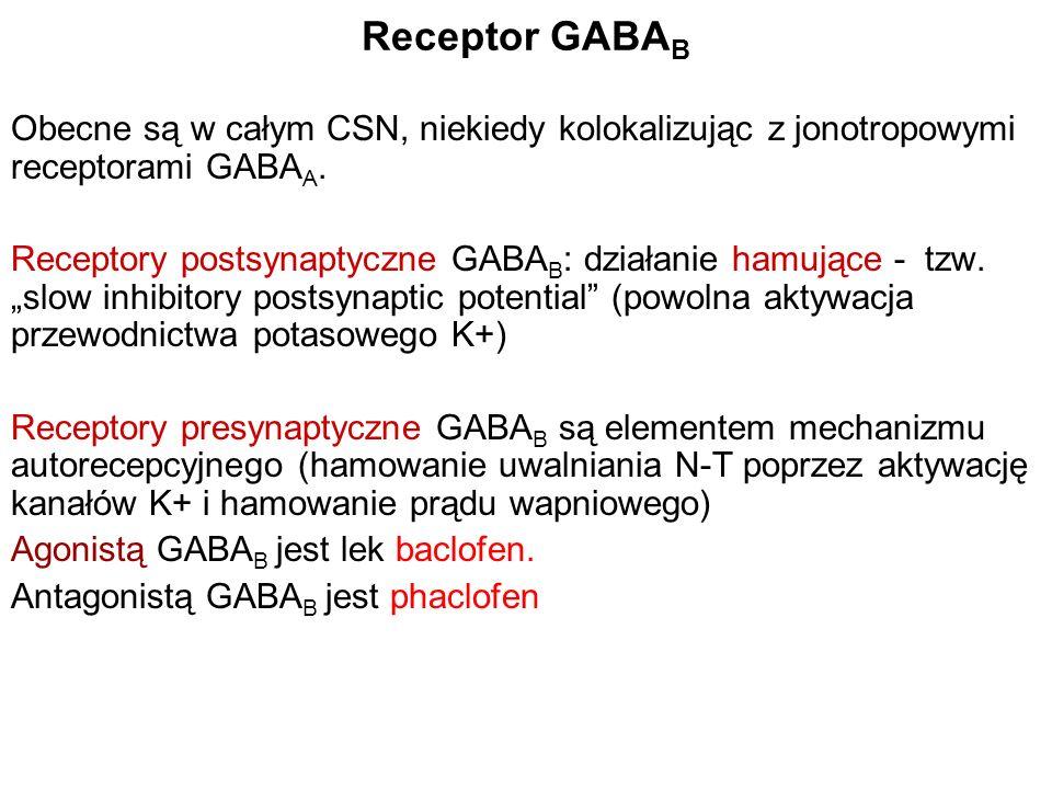 Receptor GABA B Obecne są w całym CSN, niekiedy kolokalizując z jonotropowymi receptorami GABA A. Receptory postsynaptyczne GABA B : działanie hamując