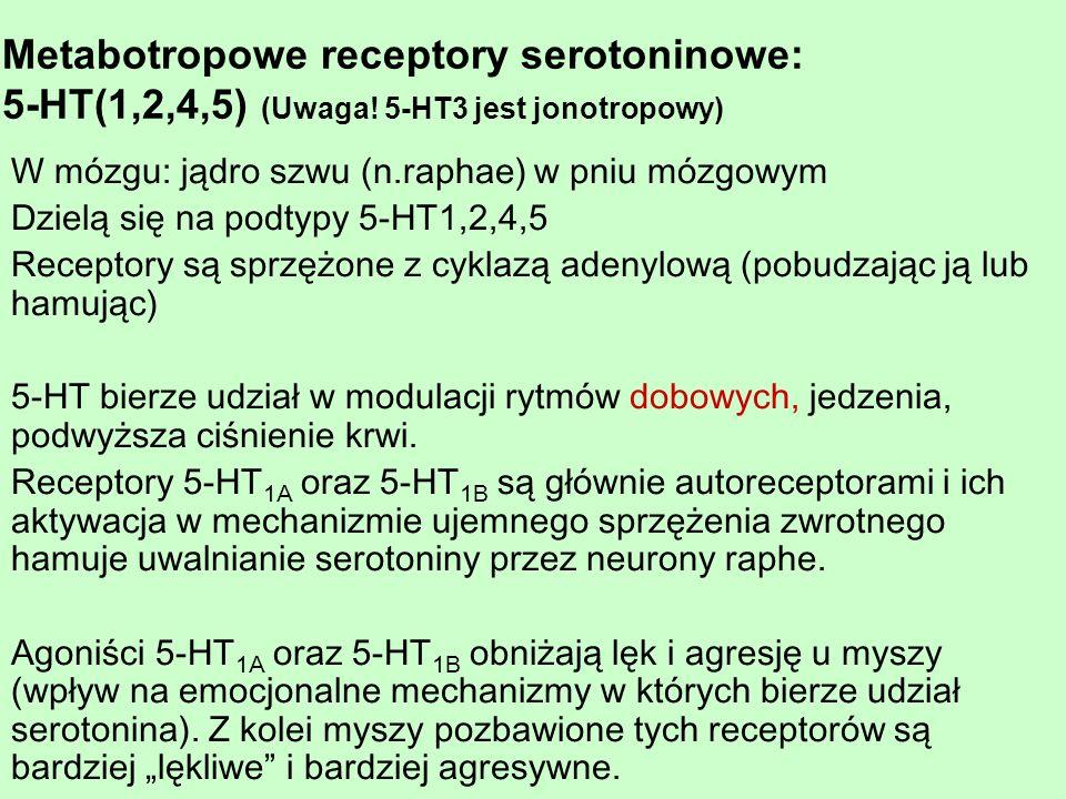 W mózgu: jądro szwu (n.raphae) w pniu mózgowym Dzielą się na podtypy 5-HT1,2,4,5 Receptory są sprzężone z cyklazą adenylową (pobudzając ją lub hamując