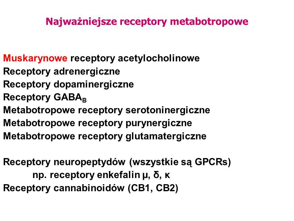 Najważniejsze receptory metabotropowe Muskarynowe receptory acetylocholinowe Receptory adrenergiczne Receptory dopaminergiczne Receptory GABA B Metabo