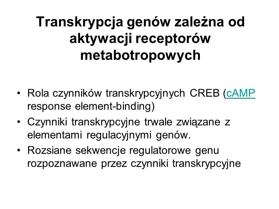 Transkrypcja genów zależna od aktywacji receptorów metabotropowych Rola czynników transkrypcyjnych CREB (cAMP response element-binding)cAMP Czynniki t