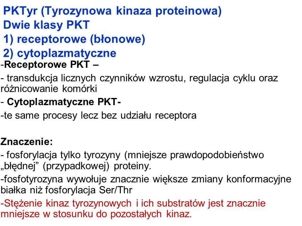PKTyr (Tyrozynowa kinaza proteinowa) Dwie klasy PKT 1) receptorowe (błonowe) 2) cytoplazmatyczne -Receptorowe PKT – - transdukcja licznych czynników w