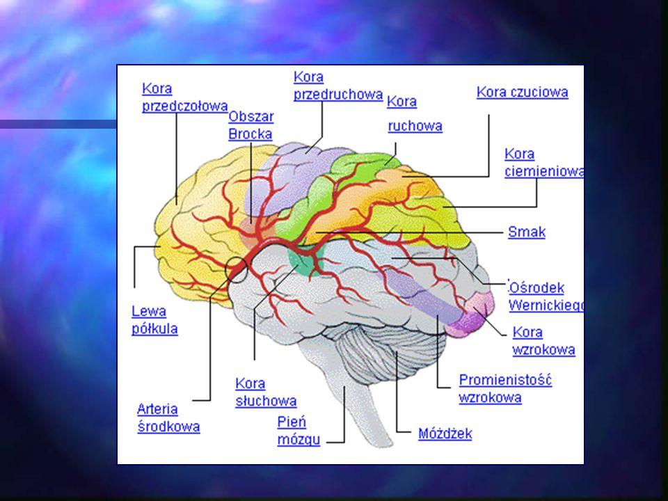 Podczas pracy mózg generuje fale elektromagnetyczne, które można mierzyć za pomocą aparatu EEG Biofeedback.