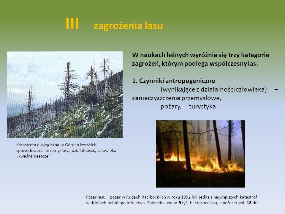 III zagrożenia lasu W naukach leśnych wyróżnia się trzy kategorie zagrożeń, którym podlega współczesny las. 1. Czynniki antropogeniczne (wynikające z