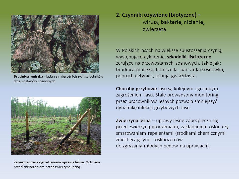 2. Czynniki ożywione (biotyczne) – wirusy, bakterie, nicienie, zwierzęta. W Polskich lasach największe spustoszenia czynią, występujące cyklicznie, sz