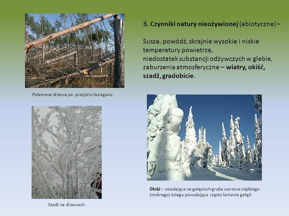3. Czynniki natury nieożywionej (abiotyczne) – Susza, powódź, skrajnie wysokie i niskie temperatury powietrza, niedostatek substancji odżywczych w gle