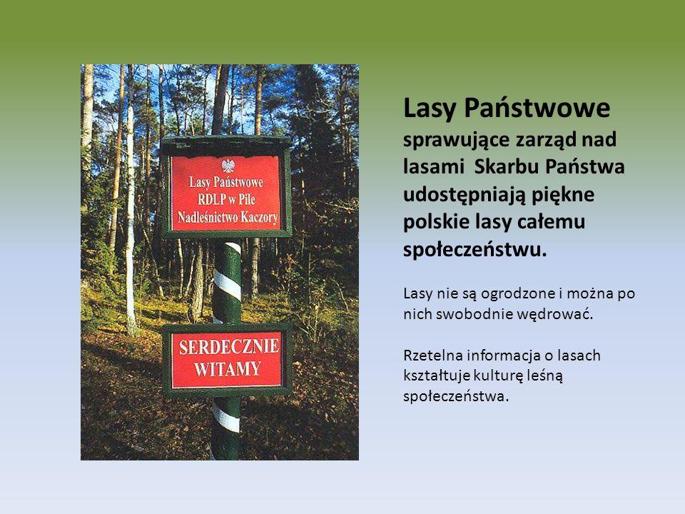 Lasy Państwowe sprawujące zarząd nad lasami Skarbu Państwa udostępniają piękne polskie lasy całemu społeczeństwu. Lasy nie są ogrodzone i można po nic