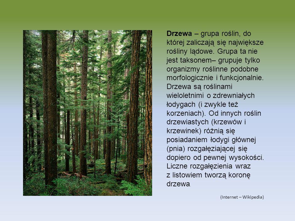 Drzewa – grupa roślin, do której zaliczają się największe rośliny lądowe. Grupa ta nie jest taksonem– grupuje tylko organizmy roślinne podobne morfolo