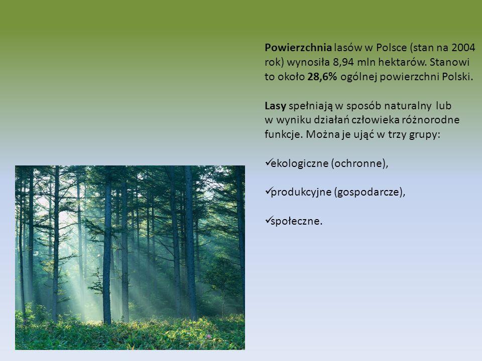 Powierzchnia lasów w Polsce (stan na 2004 rok) wynosiła 8,94 mln hektarów. Stanowi to około 28,6% ogólnej powierzchni Polski. Lasy spełniają w sposób