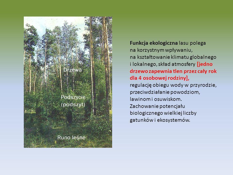 Funkcja ekologiczna lasu polega na korzystnym wpływaniu, na kształtowanie klimatu globalnego i lokalnego, skład atmosfery [jedno drzewo zapewnia tlen