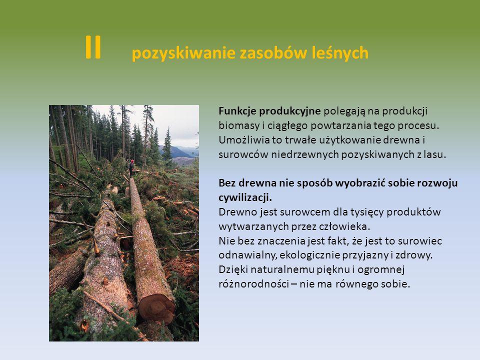 Funkcje produkcyjne polegają na produkcji biomasy i ciągłego powtarzania tego procesu. Umożliwia to trwałe użytkowanie drewna i surowców niedrzewnych