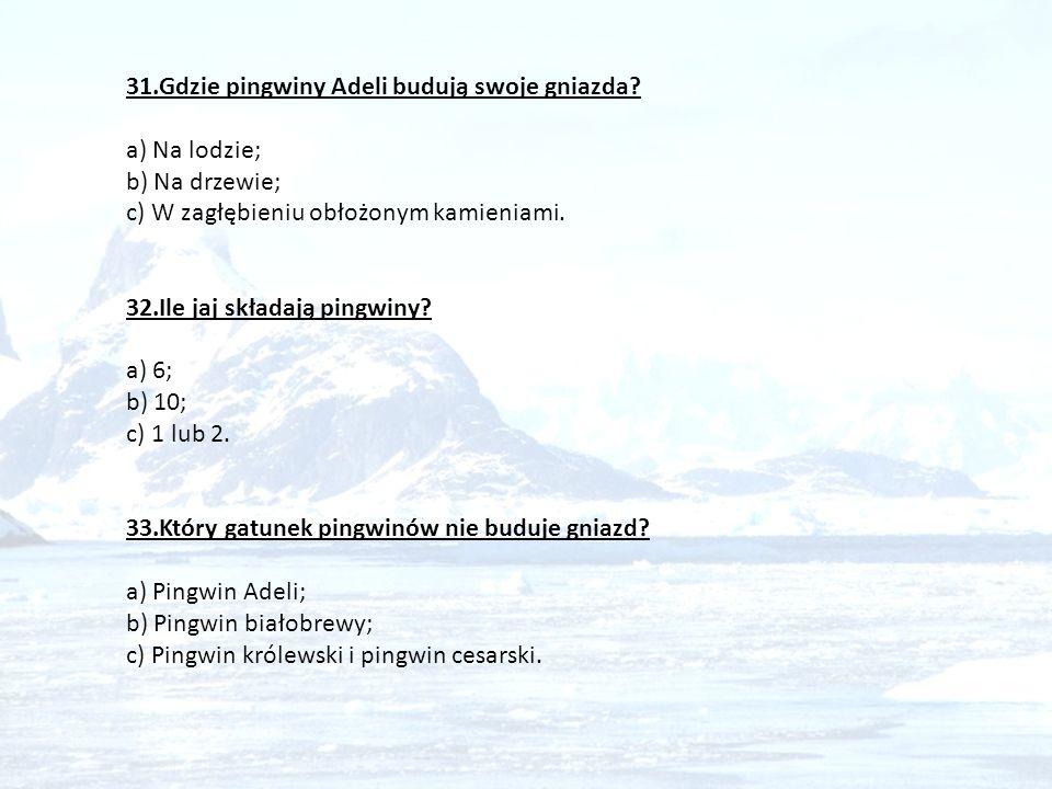 31.Gdzie pingwiny Adeli budują swoje gniazda? a) Na lodzie; b) Na drzewie; c) W zagłębieniu obłożonym kamieniami. 32.Ile jaj składają pingwiny? a) 6;