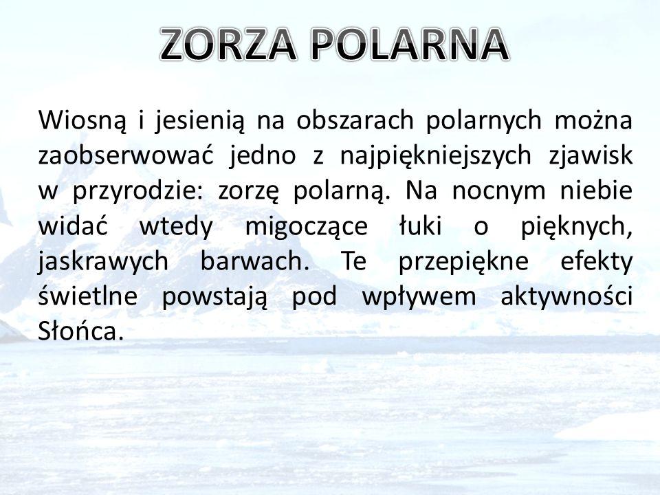 19.Jaki klimat panuje na Antarktydzie.a) Polarny; b) Chłodny; c) Gorący i wilgotny.