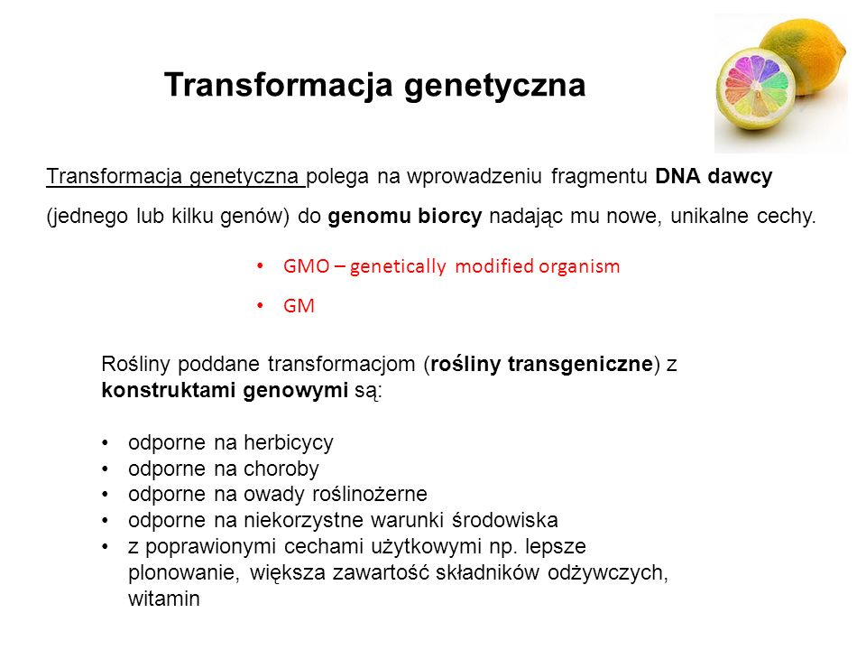 Transformacja genetyczna Transformacja genetyczna polega na wprowadzeniu fragmentu DNA dawcy (jednego lub kilku genów) do genomu biorcy nadając mu now