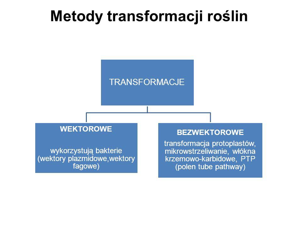 Metody transformacji roślin TRANSFORMACJE WEKTOROWE wykorzystują bakterie (wektory plazmidowe,wektory fagowe) BEZWEKTOROWE transformacja protoplastów,