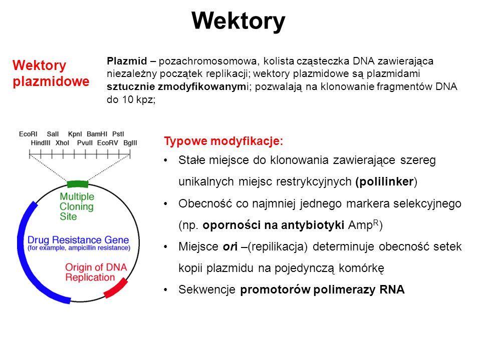 Wektory Wektory plazmidowe Plazmid – pozachromosomowa, kolista cząsteczka DNA zawierająca niezależny początek replikacji; wektory plazmidowe są plazmi