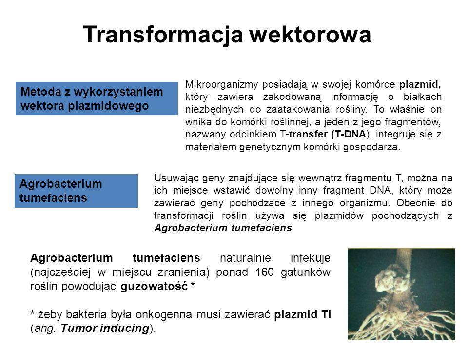 Transformacja wektorowa Metoda z wykorzystaniem wektora plazmidowego Mikroorganizmy posiadają w swojej komórce plazmid, który zawiera zakodowaną infor
