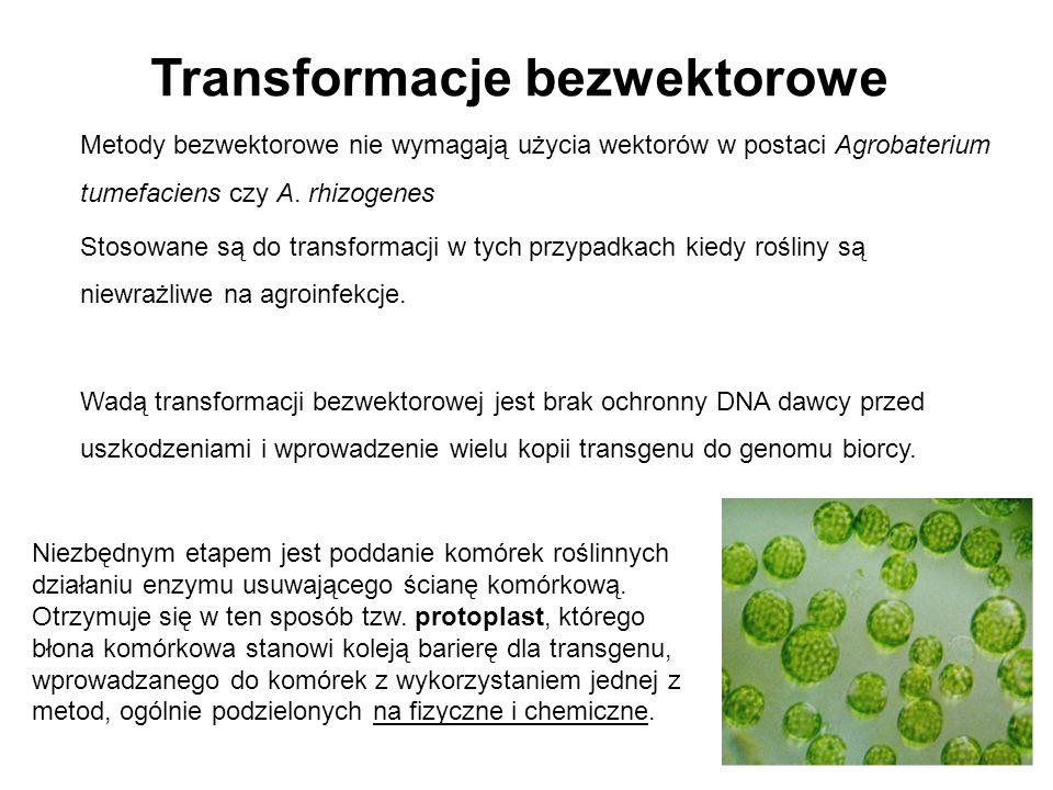 Metody bezwektorowe nie wymagają użycia wektorów w postaci Agrobaterium tumefaciens czy A. rhizogenes Stosowane są do transformacji w tych przypadkach