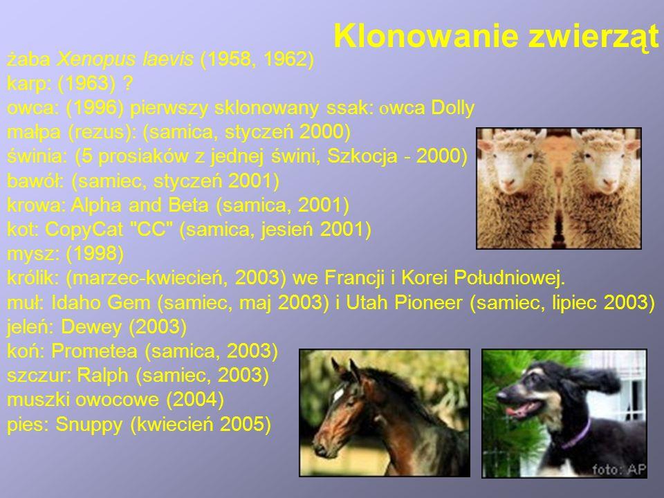żaba Xenopus laevis (1958, 1962) karp: (1963) .