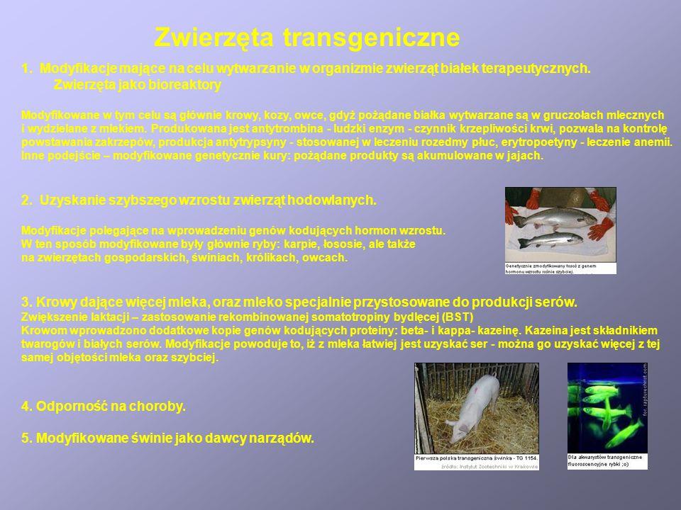 Zwierzęta transgeniczne 1.