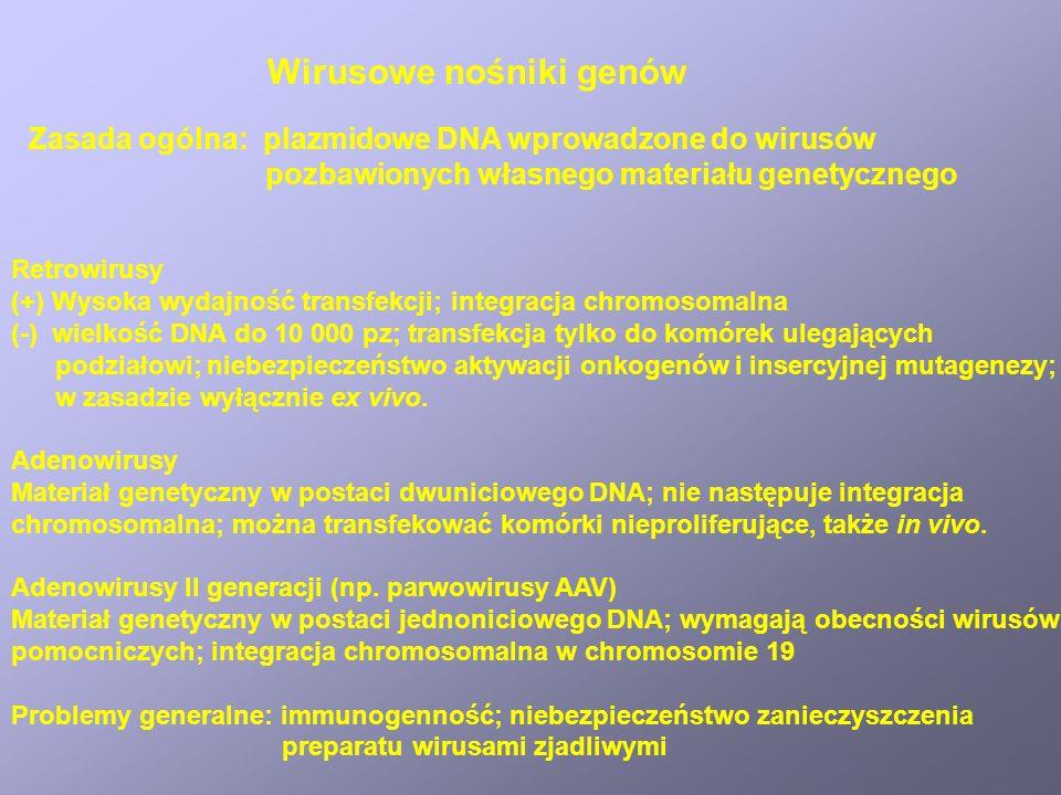 Wirusowe nośniki genów Retrowirusy (+) Wysoka wydajność transfekcji; integracja chromosomalna (-) wielkość DNA do 10 000 pz; transfekcja tylko do komórek ulegających podziałowi; niebezpieczeństwo aktywacji onkogenów i insercyjnej mutagenezy; w zasadzie wyłącznie ex vivo.