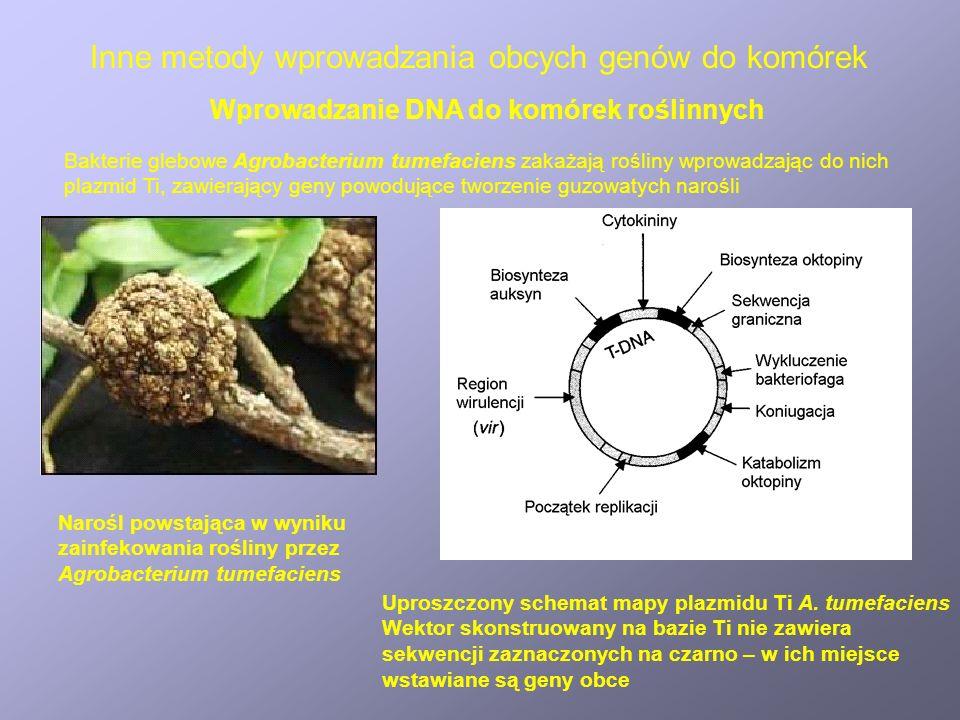 Inne metody wprowadzania obcych genów do komórek Narośl powstająca w wyniku zainfekowania rośliny przez Agrobacterium tumefaciens Wprowadzanie DNA do komórek roślinnych Uproszczony schemat mapy plazmidu Ti A.