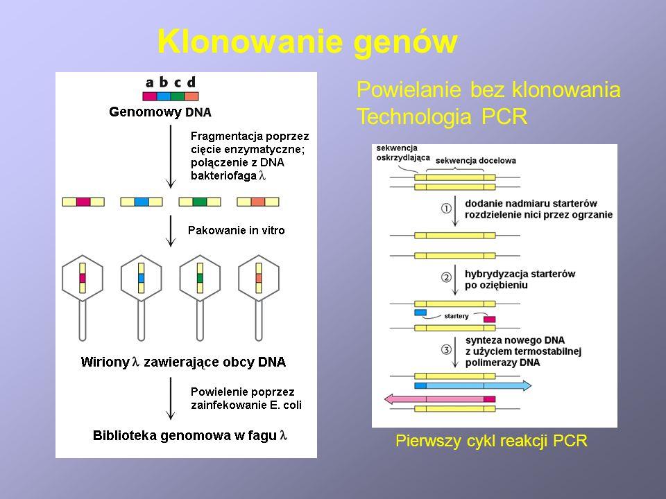 Klonowanie genów Powielanie bez klonowania Technologia PCR Pierwszy cykl reakcji PCR