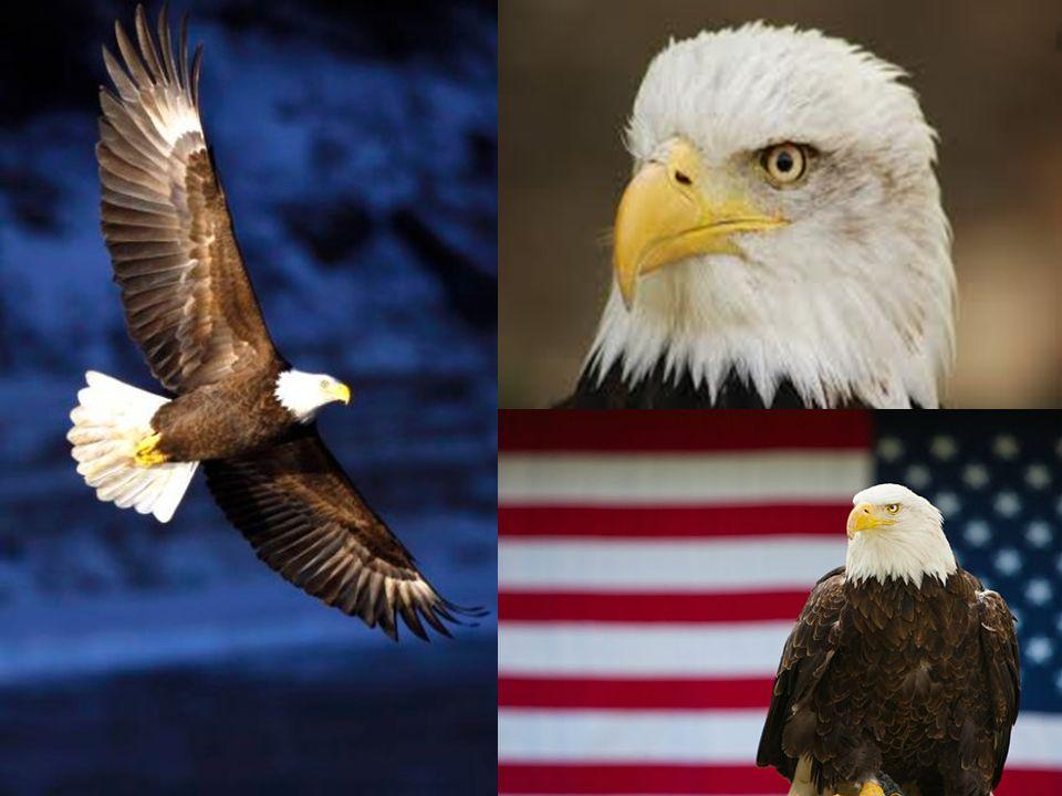 * Uważany za ojca narodu amerykańskiego.