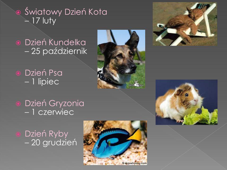 Światowy Dzień Kota – 17 luty Dzień Kundelka – 25 październik Dzień Psa – 1 lipiec Dzień Gryzonia – 1 czerwiec Dzień Ryby – 20 grudzień