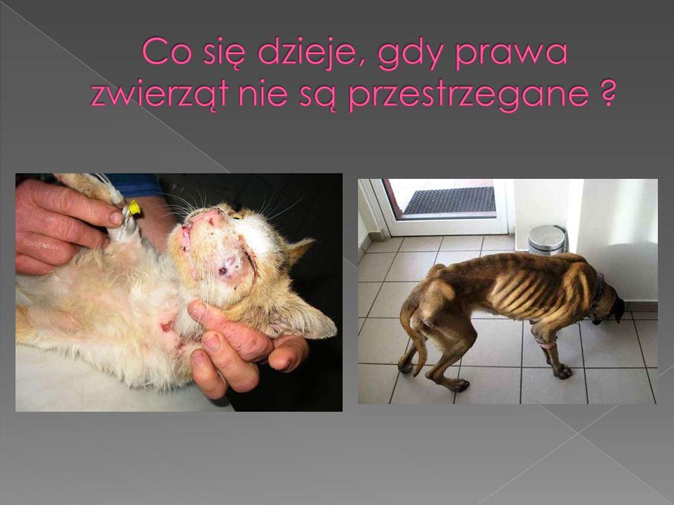 Zwierzęta chodzą wychudzone, zmarznięte i pozbawione opieki.
