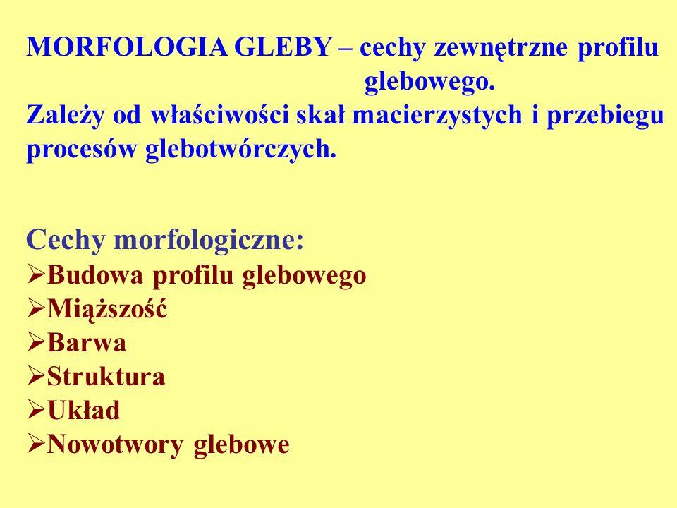 MORFOLOGIA GLEBY – cechy zewnętrzne profilu glebowego. Zależy od właściwości skał macierzystych i przebiegu procesów glebotwórczych. Cechy morfologicz