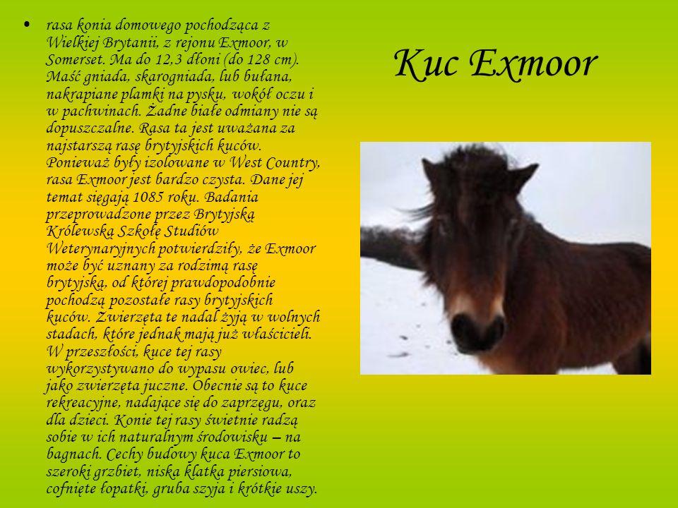 Kuc Exmoor rasa konia domowego pochodząca z Wielkiej Brytanii, z rejonu Exmoor, w Somerset. Ma do 12,3 dłoni (do 128 cm). Maść gniada, skarogniada, lu