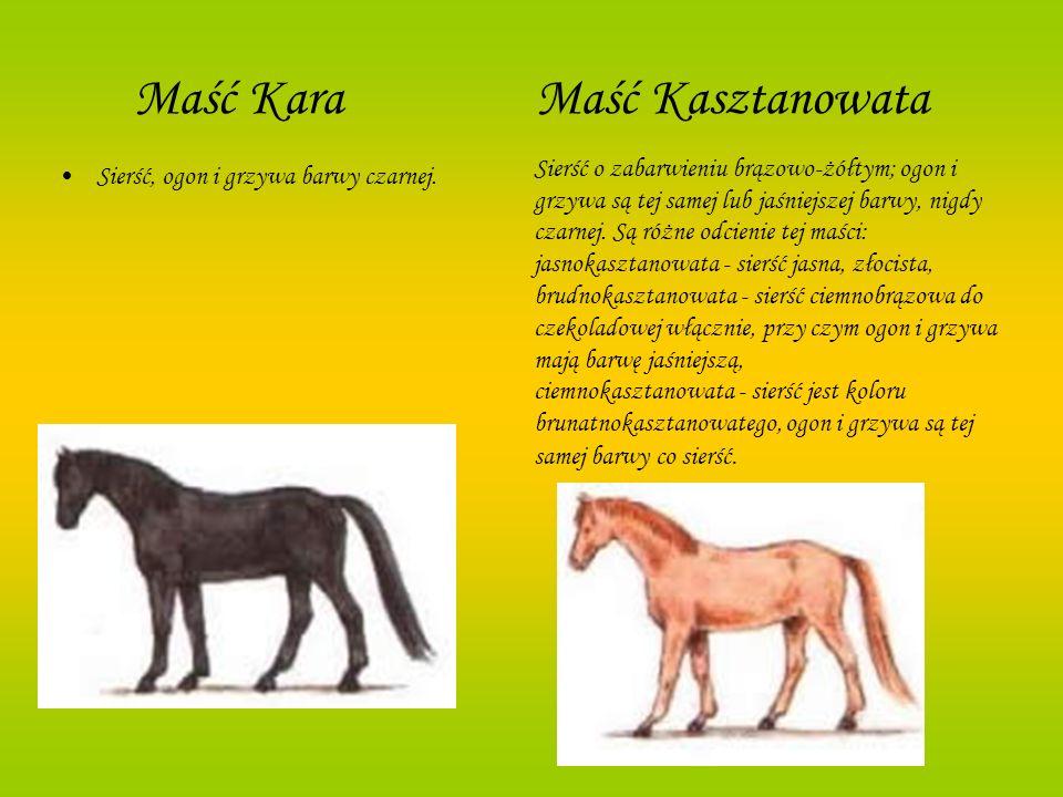 Maść Kara Maść Kasztanowata Sierść, ogon i grzywa barwy czarnej. Sierść o zabarwieniu brązowo-żółtym; ogon i grzywa są tej samej lub jaśniejszej barwy