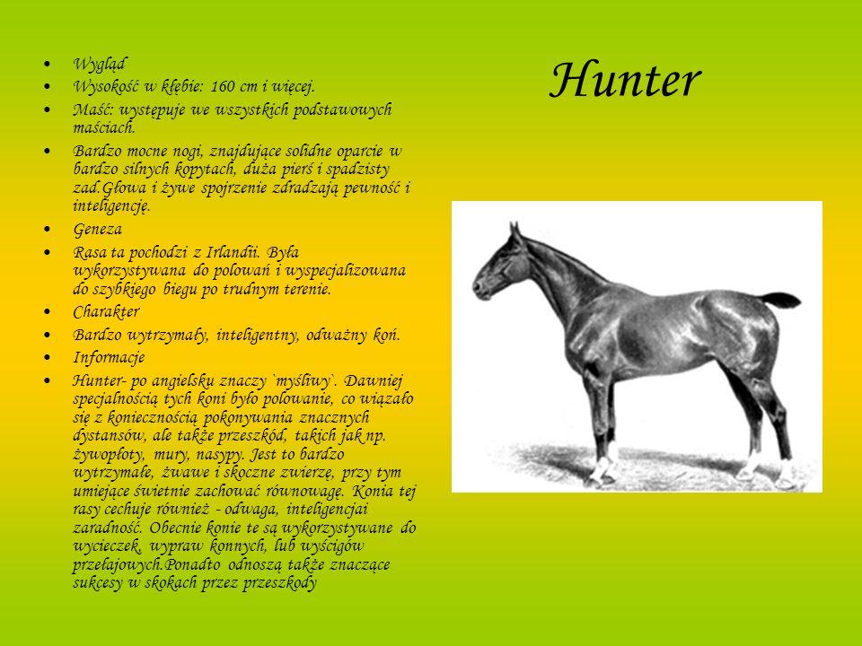Hunter Wygląd Wysokość w kłębie: 160 cm i więcej. Maść: występuje we wszystkich podstawowych maściach. Bardzo mocne nogi, znajdujące solidne oparcie w