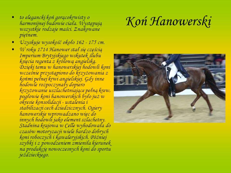 Koń Hanowerski to elegancki koń gorącokrwisty o harmonijnej budowie ciała. Występują wszystkie rodzaje maści. Znakowane piętnem. Uzyskuje wysokość oko