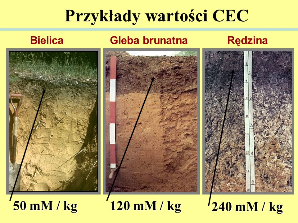 Przykłady wartości CEC 50 mM / kg 120 mM / kg 240 mM / kg RędzinaGleba brunatnaBielica