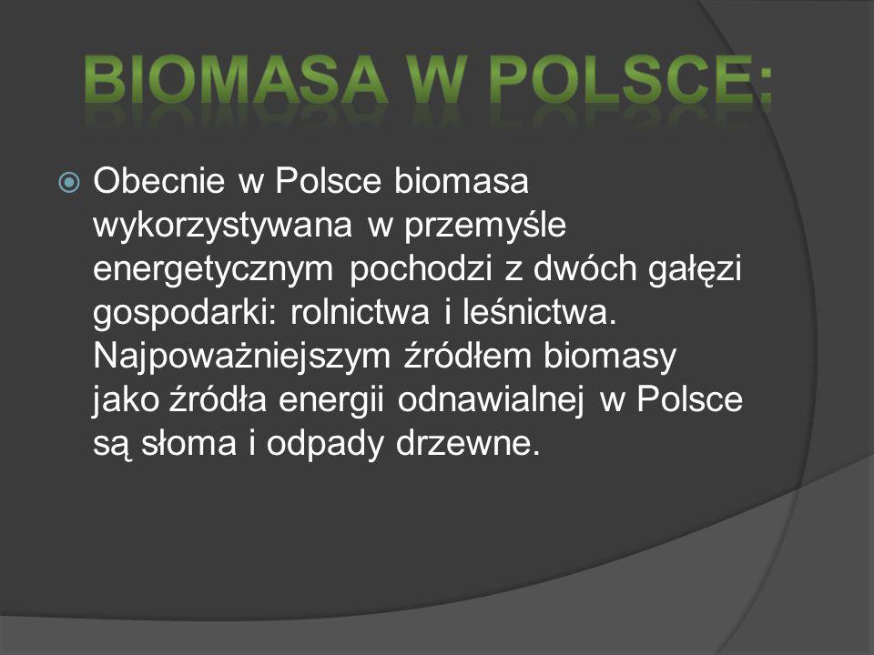 Obecnie w Polsce biomasa wykorzystywana w przemyśle energetycznym pochodzi z dwóch gałęzi gospodarki: rolnictwa i leśnictwa. Najpoważniejszym źródłem
