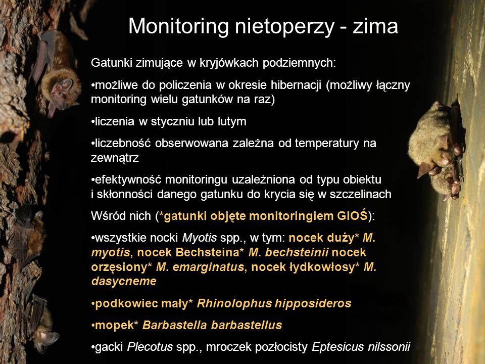 Monitoring nietoperzy - lato Gatunki kryjące się latem na strychach i w szczelinach budynków: możliwe do policzenia w okresie rozrodu (liczebność dorosłych samic i młodych) liczenia w czerwcu lub lipcu bezpośrednie liczenia podczas dziennych kontroli strychów lub wylatujących osobników podczas wieczornej obserwacji Wśród nich (*gatunki objęte monitoringiem GIOŚ): nocek duży* Myotis myotis, nocek orzęsiony* M.