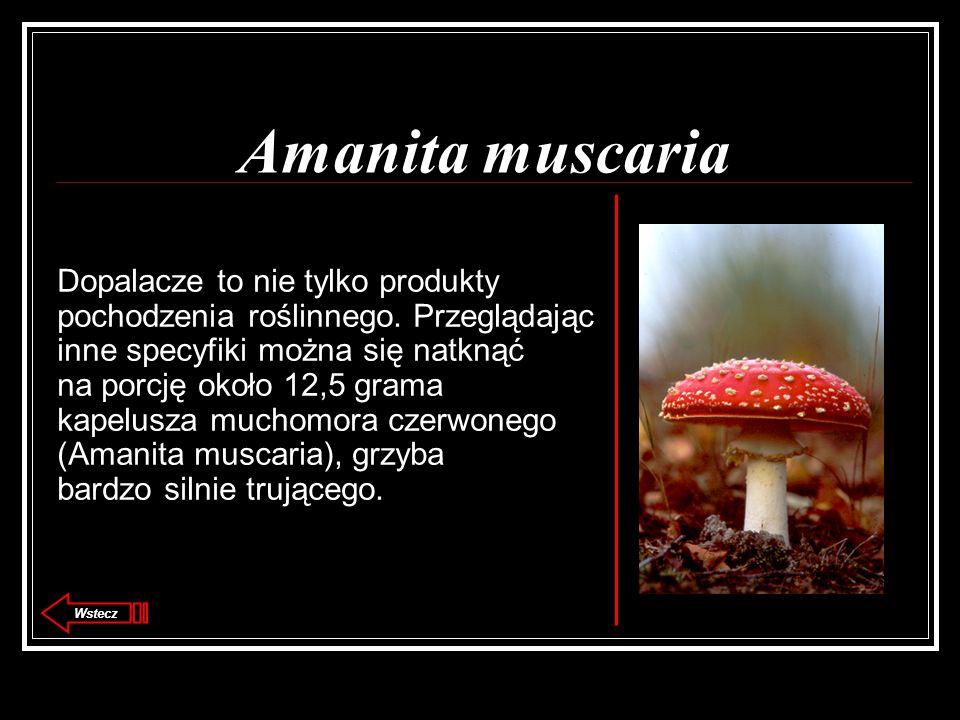 Amanita muscaria Dopalacze to nie tylko produkty pochodzenia roślinnego. Przeglądając inne specyfiki można się natknąć na porcję około 12,5 grama kape