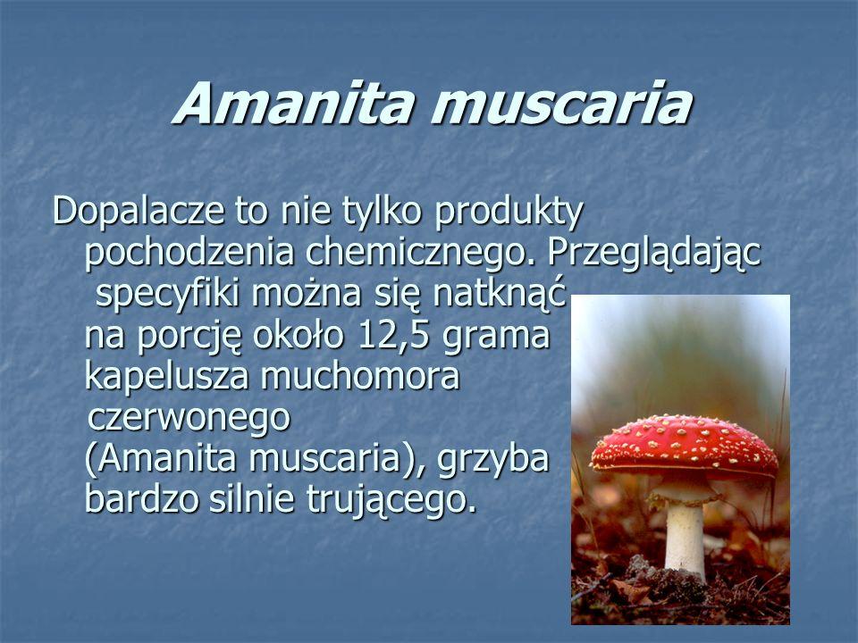 Amanita muscaria Dopalacze to nie tylko produkty pochodzenia chemicznego.