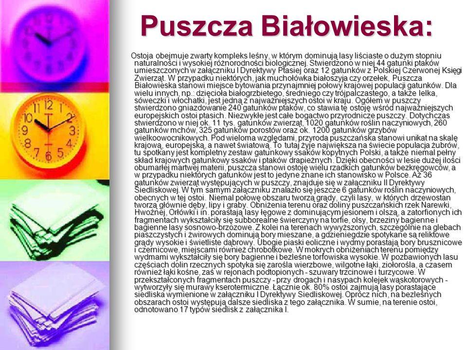 Puszcza Białowieska: Ostoja obejmuje zwarty kompleks leśny, w którym dominują lasy liściaste o dużym stopniu naturalności i wysokiej różnorodności bio