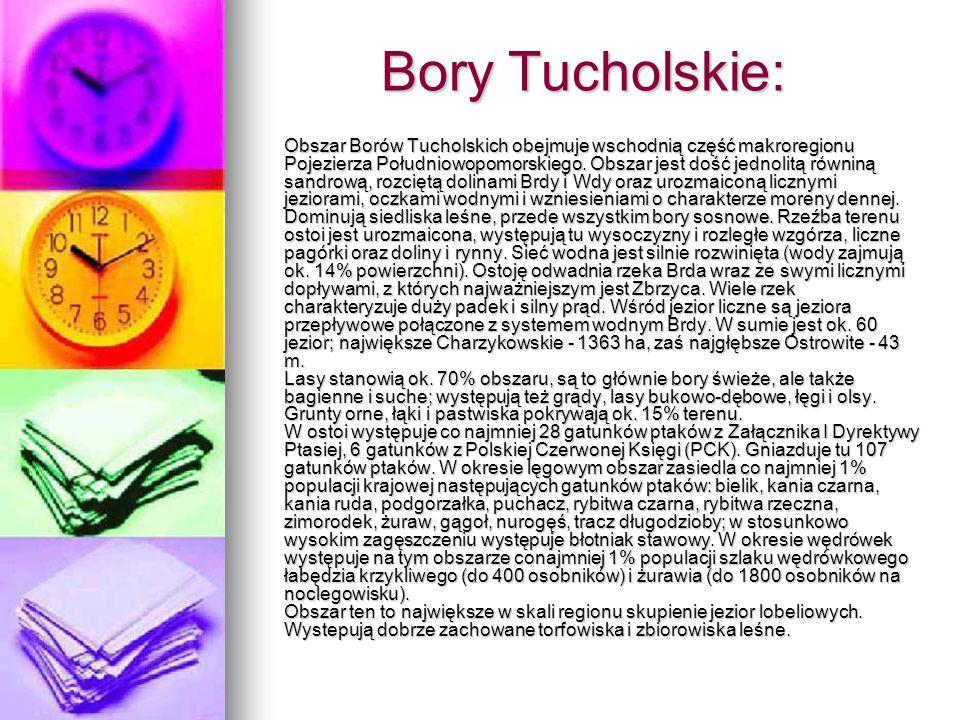 Bory Tucholskie: Obszar Borów Tucholskich obejmuje wschodnią część makroregionu Pojezierza Południowopomorskiego. Obszar jest dość jednolitą równiną s
