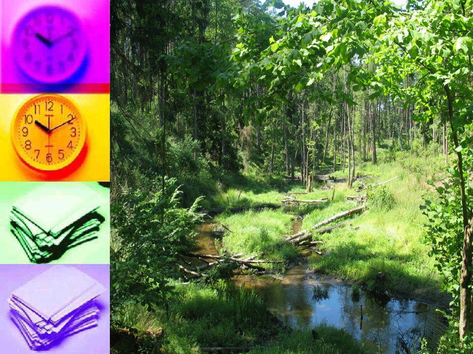 Puszcza Białowieska: Ostoja obejmuje zwarty kompleks leśny, w którym dominują lasy liściaste o dużym stopniu naturalności i wysokiej różnorodności biologicznej.