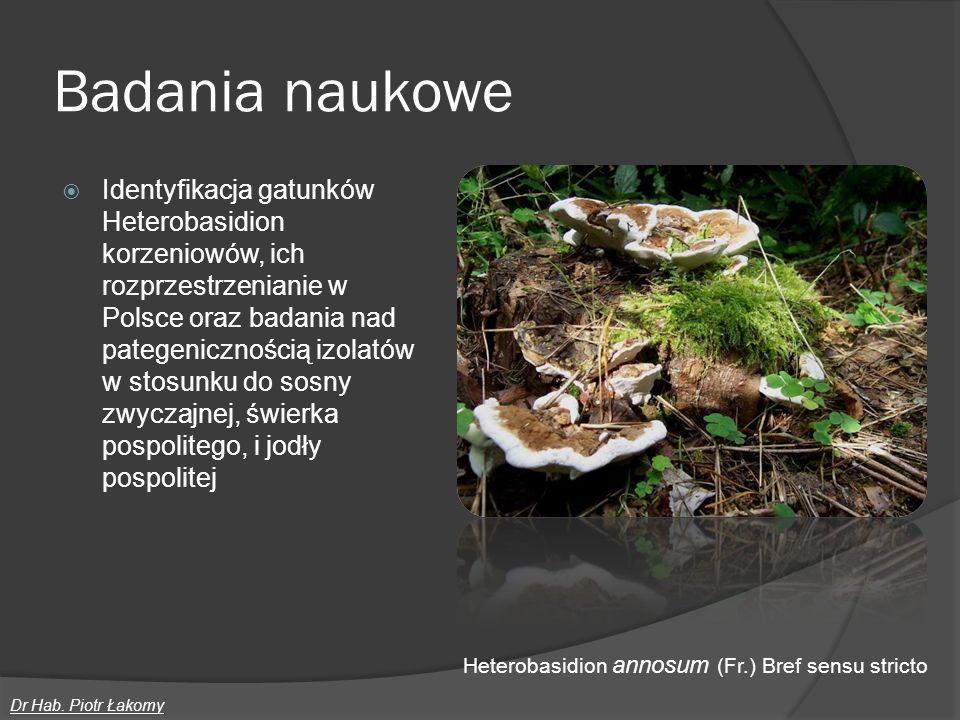Badania naukowe Identyfikacja gatunków Heterobasidion korzeniowów, ich rozprzestrzenianie w Polsce oraz badania nad pategenicznością izolatów w stosun