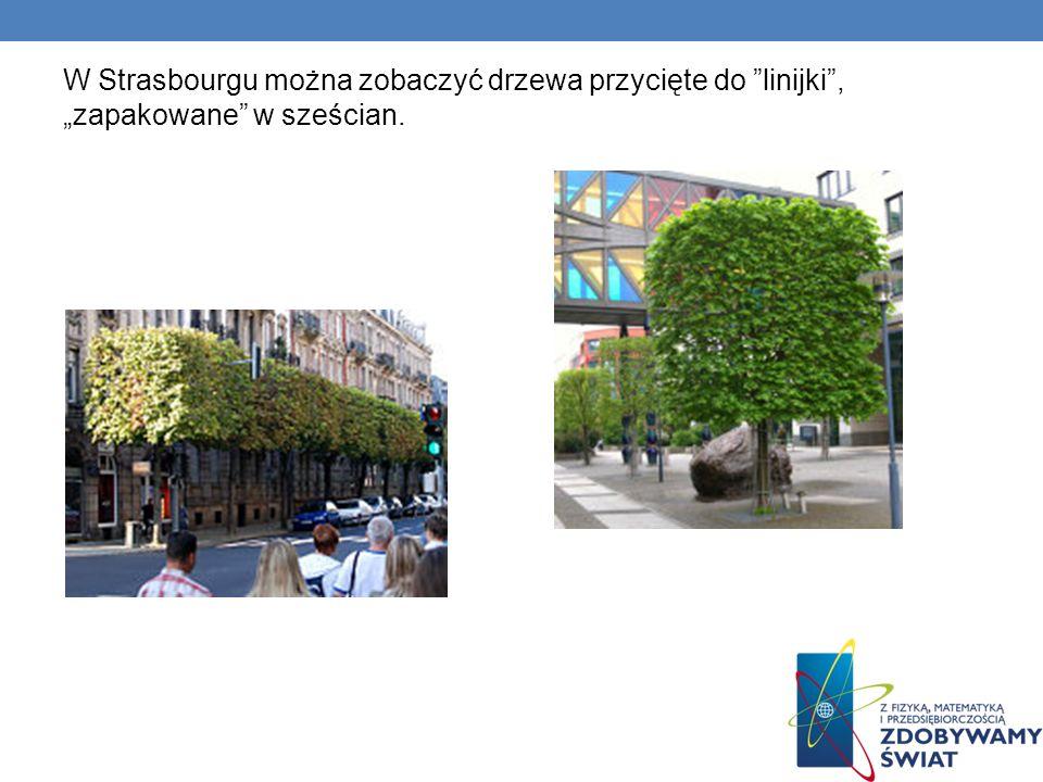 W Strasbourgu można zobaczyć drzewa przycięte do linijki, zapakowane w sześcian.