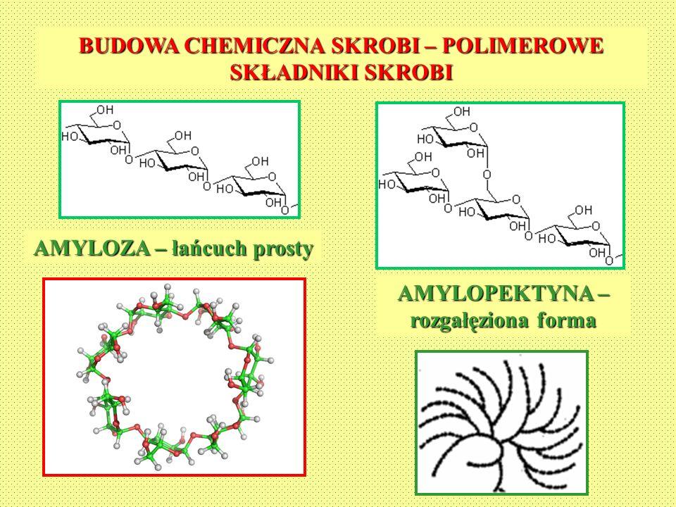 BUDOWA CHEMICZNA SKROBI – POLIMEROWE SKŁADNIKI SKROBI AMYLOZA – łańcuch prosty AMYLOPEKTYNA – rozgałęziona forma