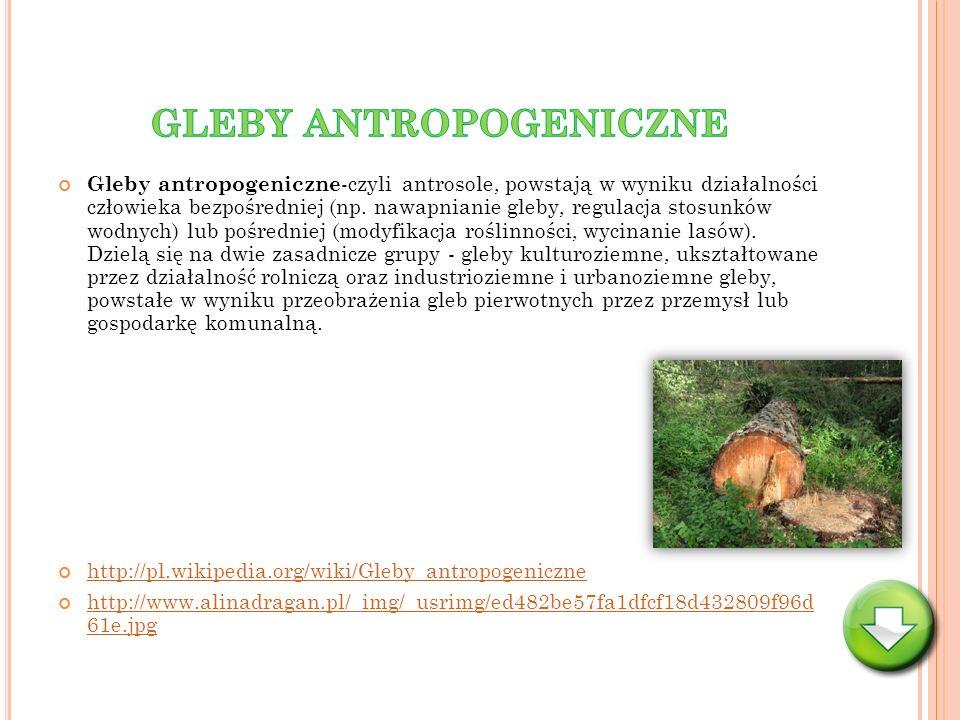 Gleby antropogeniczne -czyli antrosole, powstają w wyniku działalności człowieka bezpośredniej (np. nawapnianie gleby, regulacja stosunków wodnych) lu