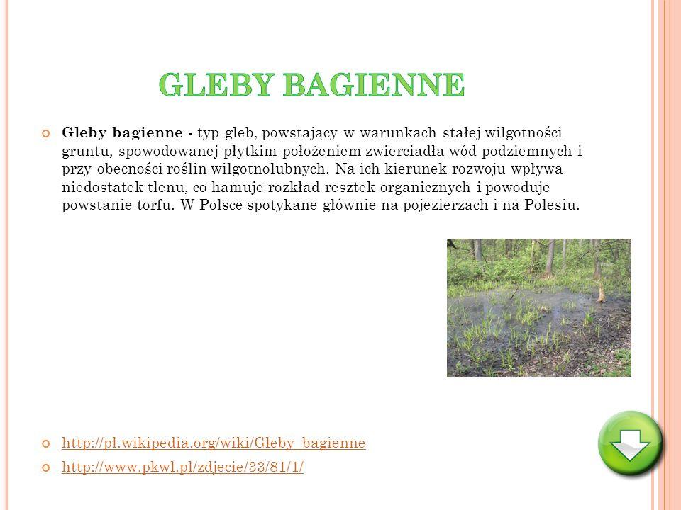 Gleby bagienne - typ gleb, powstający w warunkach stałej wilgotności gruntu, spowodowanej płytkim położeniem zwierciadła wód podziemnych i przy obecno
